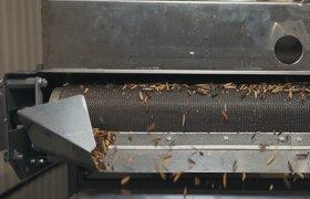 Российская компания по переработке отходов насекомыми «Энтопротэк» привлекла $2 млн от израильской Granot