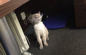 Что стало с котом Стартапом из ФРИИ?