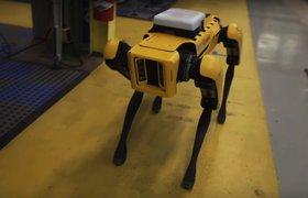Boston Dynamics в 2019 году запустит продажу роботов впервые за 26 лет существования