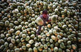 Фонд ru-Net вложился в индийский сервис доставки продуктов PepperTap