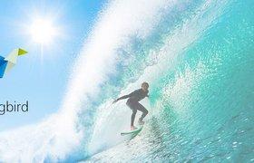 Surfingbird оценили в $10 млн