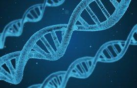 Новый фонд HBio Fund основателя из России займется инвестициями в биотехнологические компании США