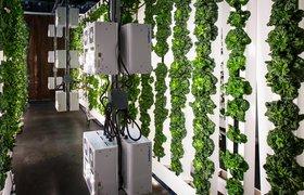 ФРИИ запустил совместный с Bayer отбор стартапов в сфере агротеха