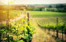 Большое подспорье для малых производителей: как изменится работа фермеров после разрешения торговать на поле