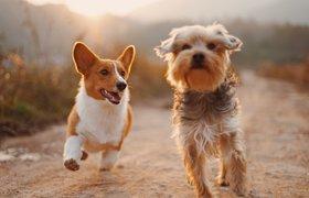 Казанский стартап создал приложение для владельцев собак