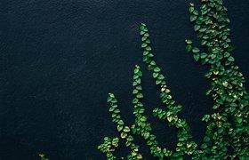 «Зеленые» технологии и их применение в бизнесе обсудят на GreenTech Forum