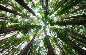 Компания «Экологические Инвестиции» привлекла 7,8 млн рублей