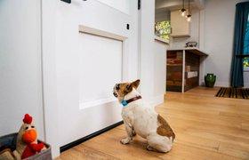 Разработана «умная» дверь для животных с функцией удаленного управления