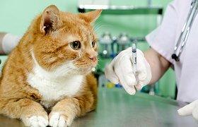 В технополисе «Москва» начнут разрабатывать вакцины