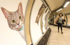 Все объявления на станции лондонского метро заменили фотографиями кошек
