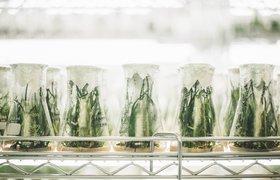 Продукты из будущего: что заставляет расти рынок Deep FoodTech