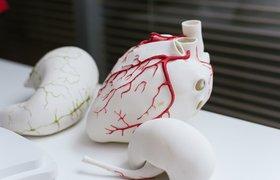 Печать органов: как продвинулись технологии 3D-биопринтинга и что мешает их развитию
