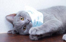 В России разработали тест-систему для выявления антител к COVID у животных