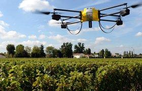 Как искусственный интеллект помогает фермерам в выращивании урожая