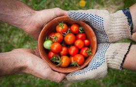 Хотите работать с фермерскими продуктами? Вот что нужно учесть