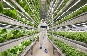 Как искусственный интеллект помогает выращивать здоровую еду