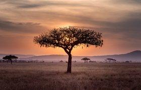 «Не стоит рассматривать Африку как рынок сбыта устаревших технологий». Как стартапу зайти на Черный континент
