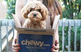 Ритейлер PetSmart и стартап Chewy готовятся провести крупнейшую сделку в электронной коммерции