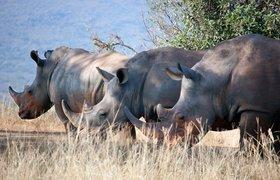 Стартовал прием заявок в акселератор «Носороги НТИ»