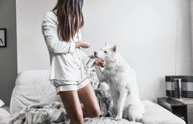 МТС начал тестировать сервис онлайн-страхования животных