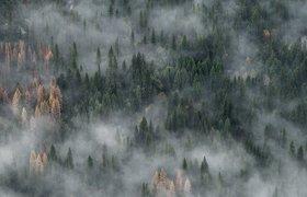 Почему горят леса в России и можно ли с этим бороться?