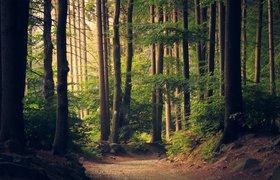 Студент из США научился создавать имитацию редких пород деревьев из чайного гриба