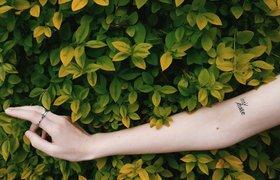 «Алиса» научилась выявлять потенциально опасные родинки для борьбы с раком кожи