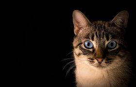 Кошкам показали кошачьи фильтры для соцсетей — животные в ужасе