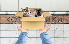 В сети обыграли названия станций метро Москвы — в ход пошли котики и кони