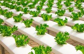 Топ-20 мировых лидеров в сфере технологий пищевой промышленности