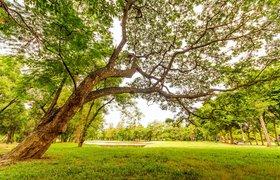 10 самых экологически чистых стран мира по мнению экспатов