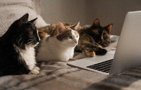 Мероприятия в эпоху онлайн: как не упустить аудиторию