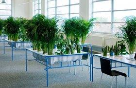 Огород на рабочем столе или обзор зеленых стартапов