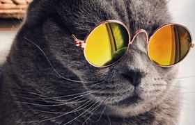 Хайп не поможет: пять причин не внедрять маркетинговые тренды в бизнес