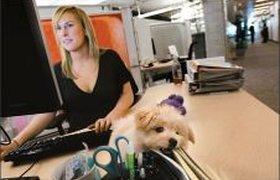 Новая мода столичных офисов: животные на работе