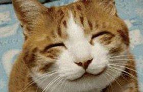Ученые Гарварда доказали, что счастье может быть заразительным