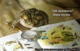 Меню для жабы