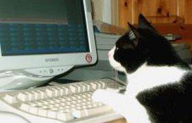 Дневник кота Василия