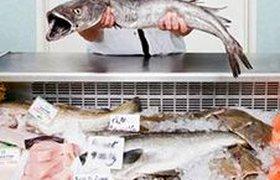 Москвичам пообещали киоски с самой дешевой рыбой в городе