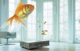 «РЕСО-Гарантия»: большому аквариуму - большая гражданская ответственность