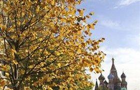 Москву на выходных ждет холодный Хэллоуин