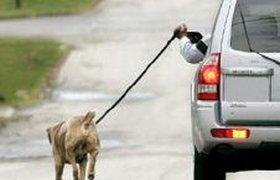 Чем грозит неправильное содержание домашних животных