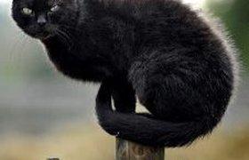 """""""РОСНО"""": на страхование принимается кот с предоставлением его фото"""