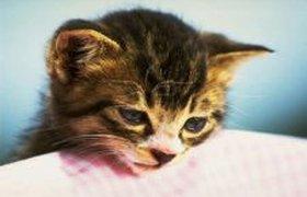 В Кемерово за долги арестовали котенка
