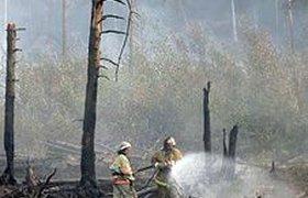 В России горят 4 тыс. га радиоактивного леса