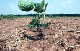 Глобальное потепление ведет к сокращению флоры