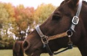 """В Турции появился отель для лошадей с системой """"все включено"""""""