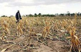 Засуха стоила фермерам 33 млрд рублей, подсчитал Минсельхоз