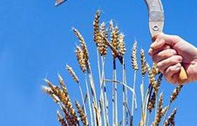 Эмбарго на экспорт зерна продлится до осени 2011 года