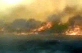 За сутки площадь природных пожаров в РФ увеличилась втрое